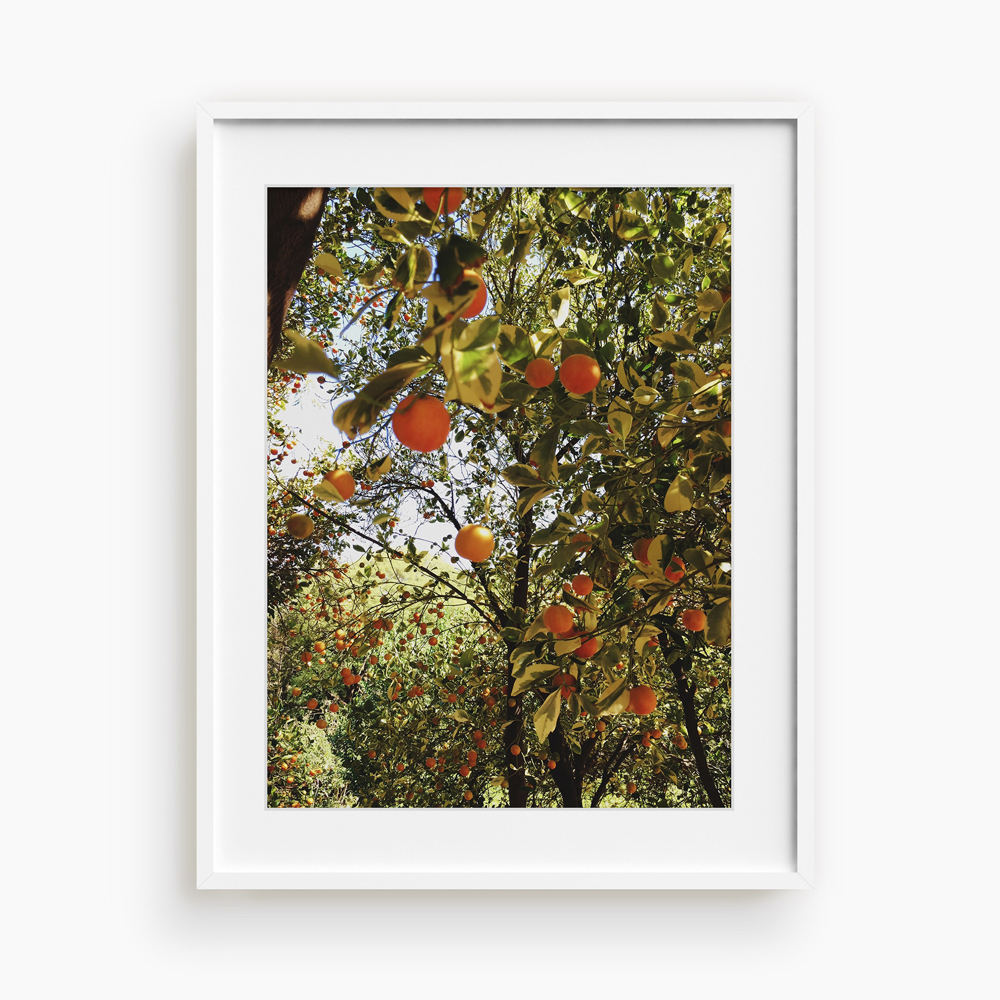 Tappan-Collective-Lani-Trock's-Abundance-With-Ease - Easily search for fine art with Tappan's, finding hidden gems such as this photographic print by Lani Trock. $120, tappancollective.com