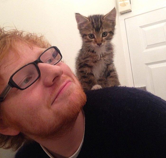 Ed-Sheeran-cat-Graham-dies
