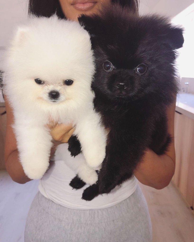 Kim Kardashian Introduces New Pups