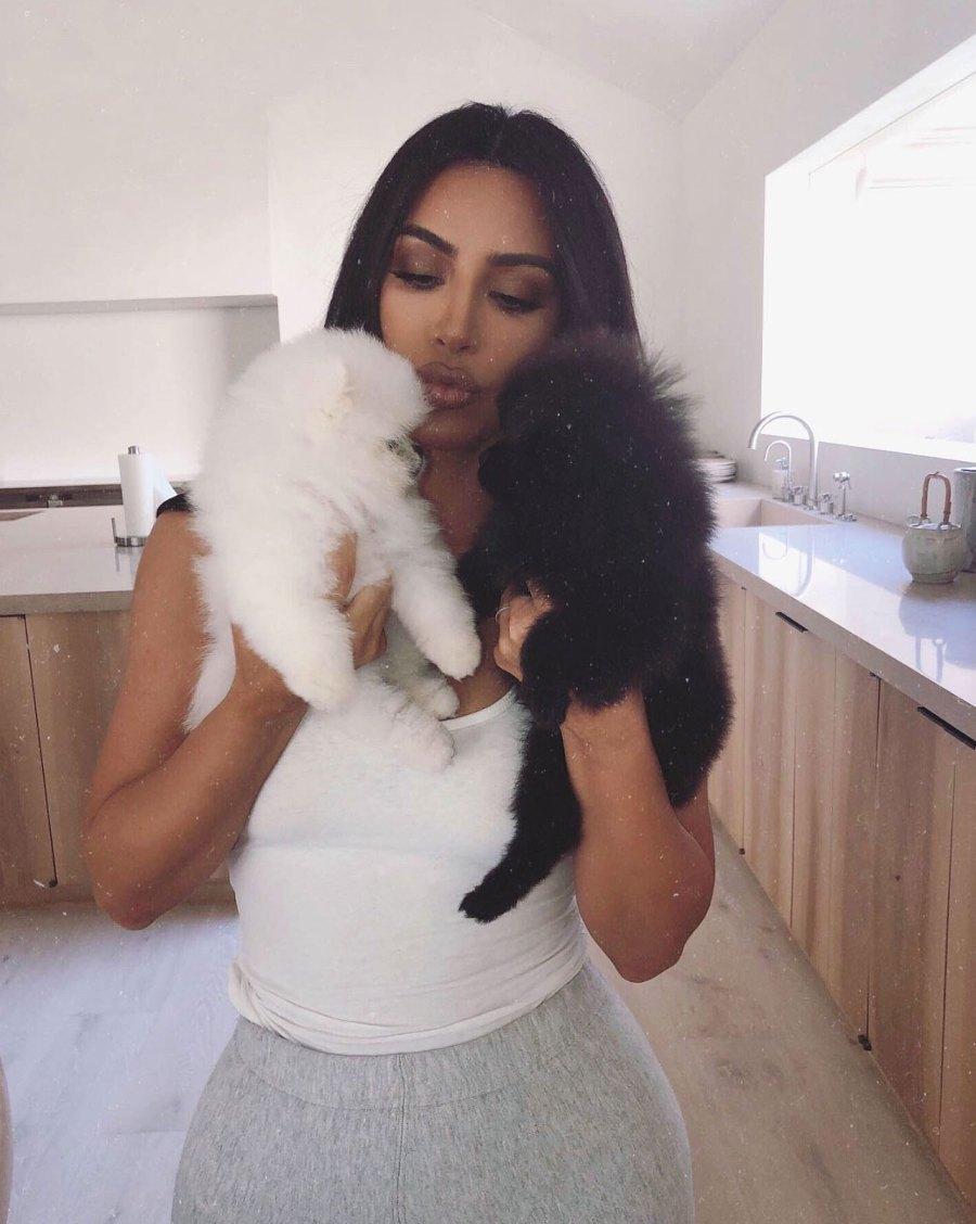 Kim Kardashian Shares Adorable Photos of New Pomeranian Puppies