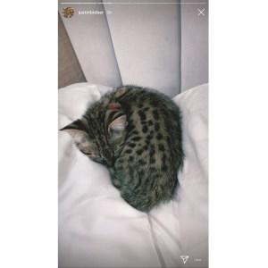 Justin Bieber Says PETA Can Suck It
