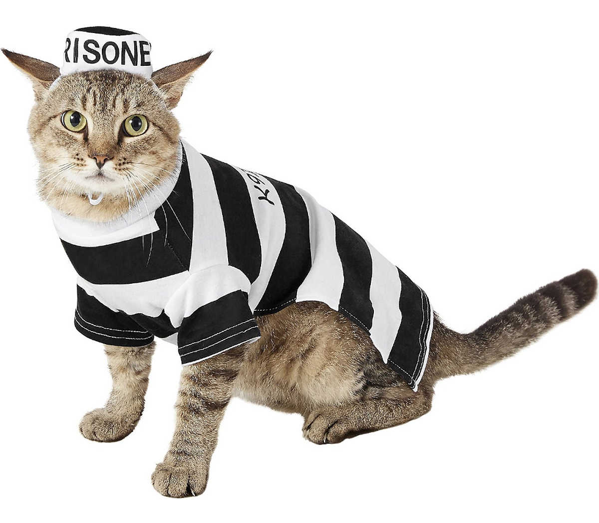 cat prisoner costume