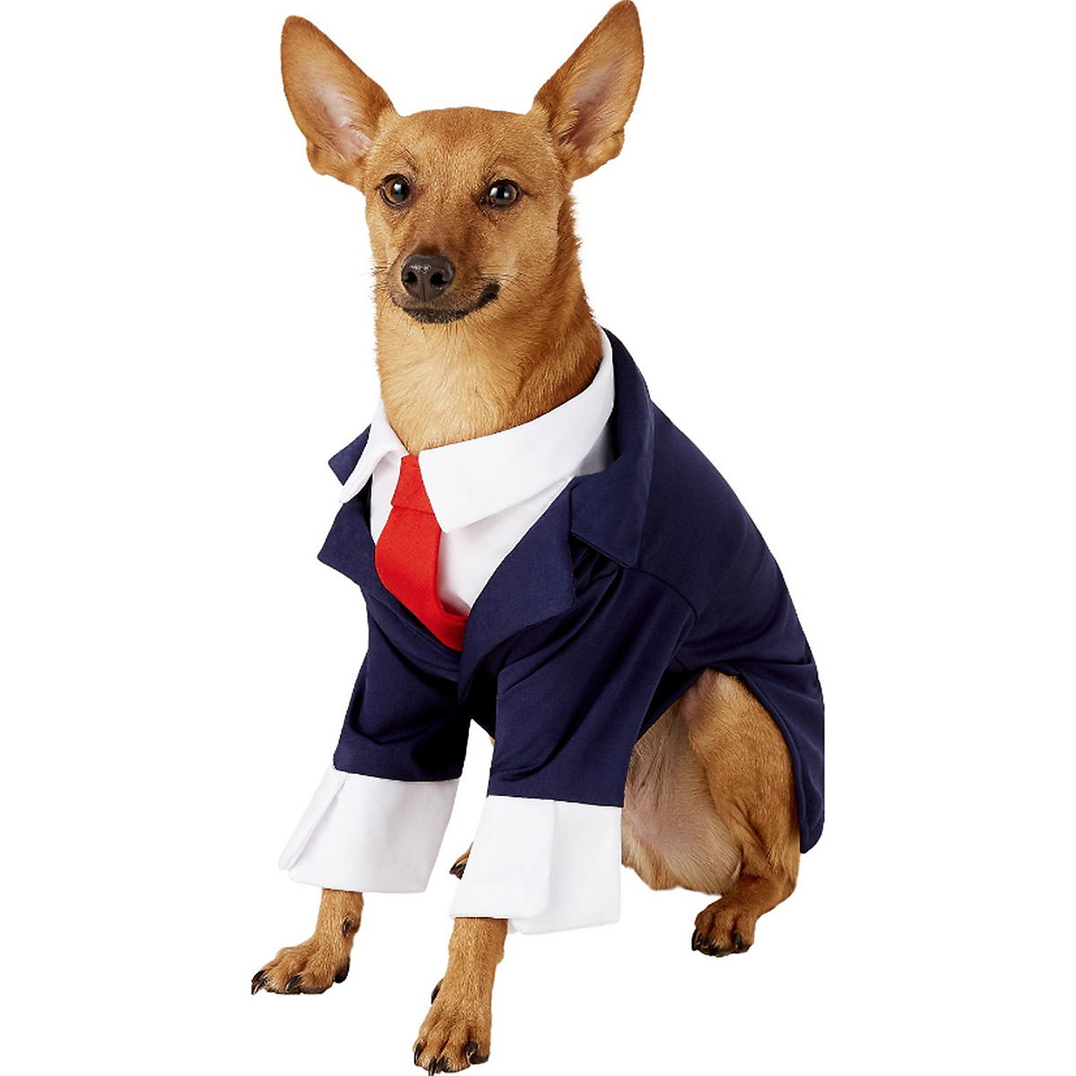 dog business costume