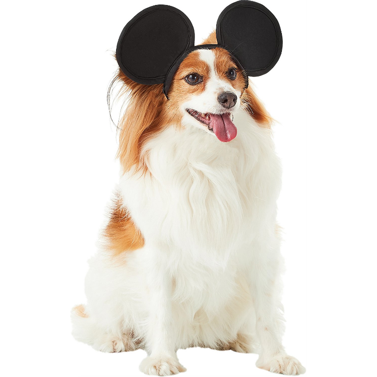 dog mickey mouse ears