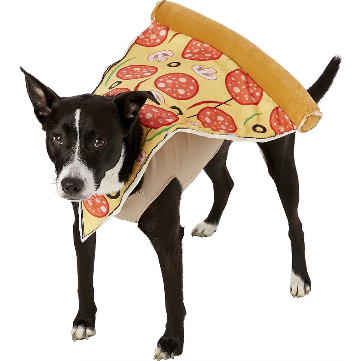 dog pizza costume