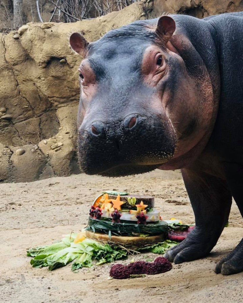 Fiona the Hippo Celebrates Her 3rd Birthday With a Special Cake