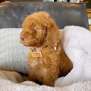 Kris Jenner's New Dog Came From Same Litter as Chrissy Teigen's New Pup