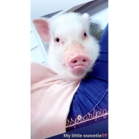 Jenna-Cooper-pig