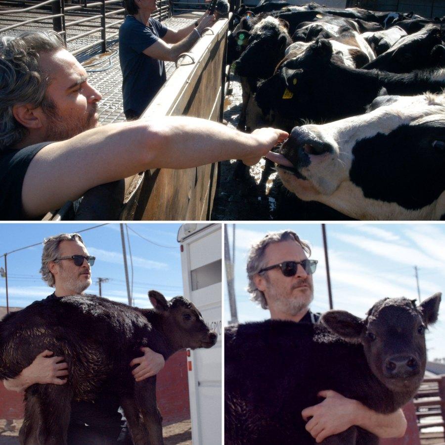 Joaquin Phoenix Rescues Cow Her Newborn Calf After Moving Oscars Speech