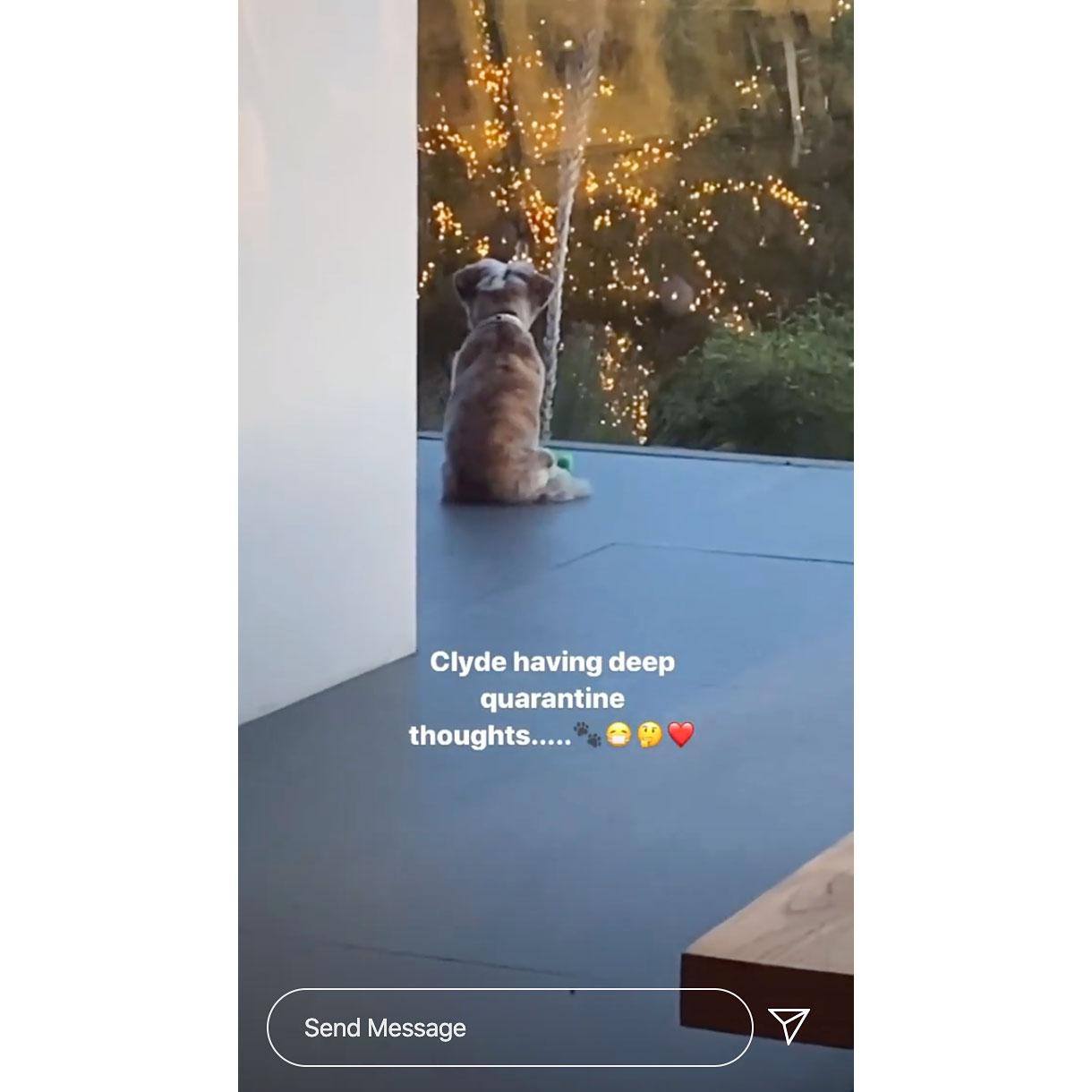 Jennifer Aniston Shows Her Pup Having Deep Quarantine Thoughts Amid Coronavirus Crisis