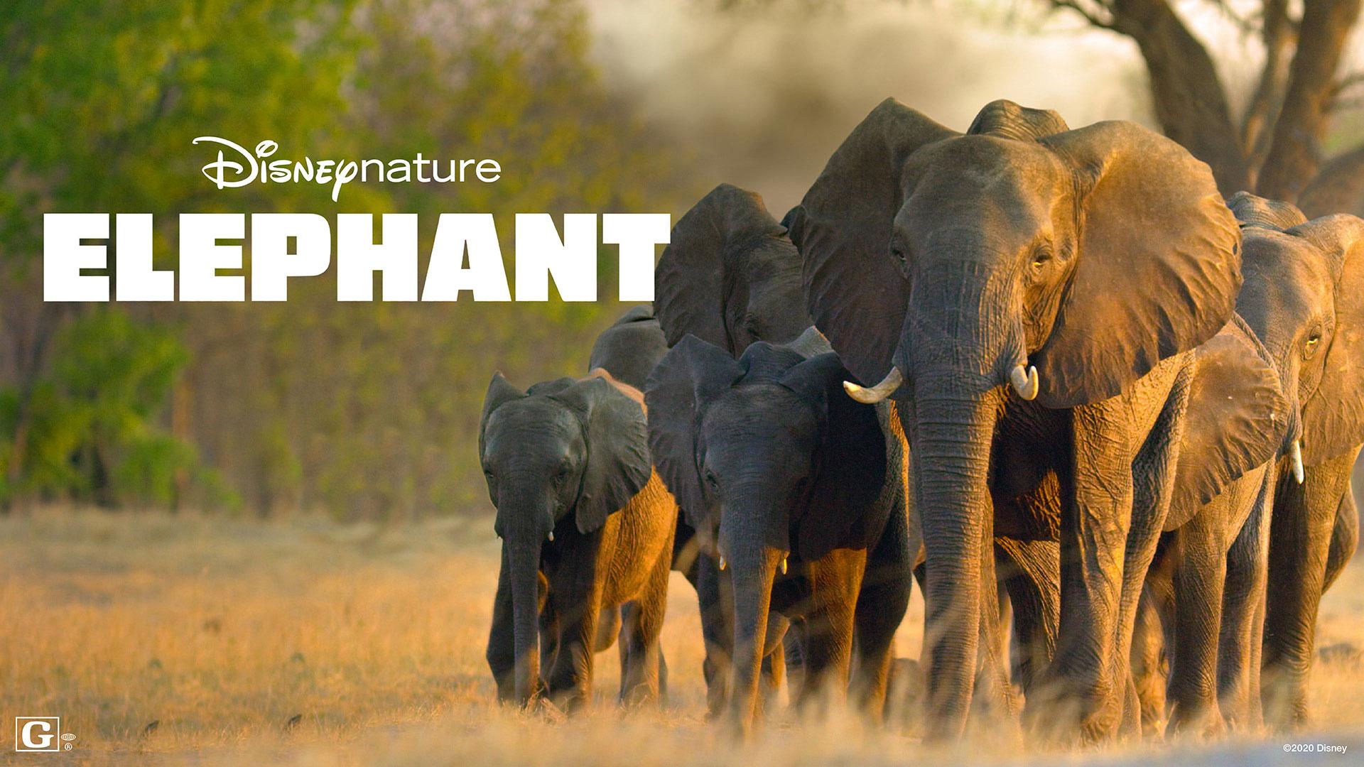 Meghan Markle Disney Elephant GMA