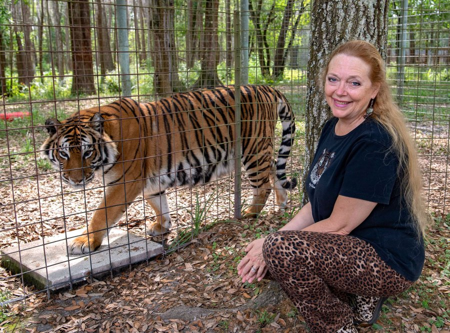 Tiger Priya and Carole Baskin Big Cats Rescue Tiger King