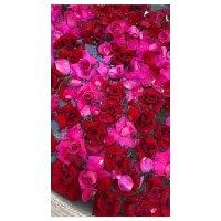 Rose Petals Vanessa Bryant Gallery