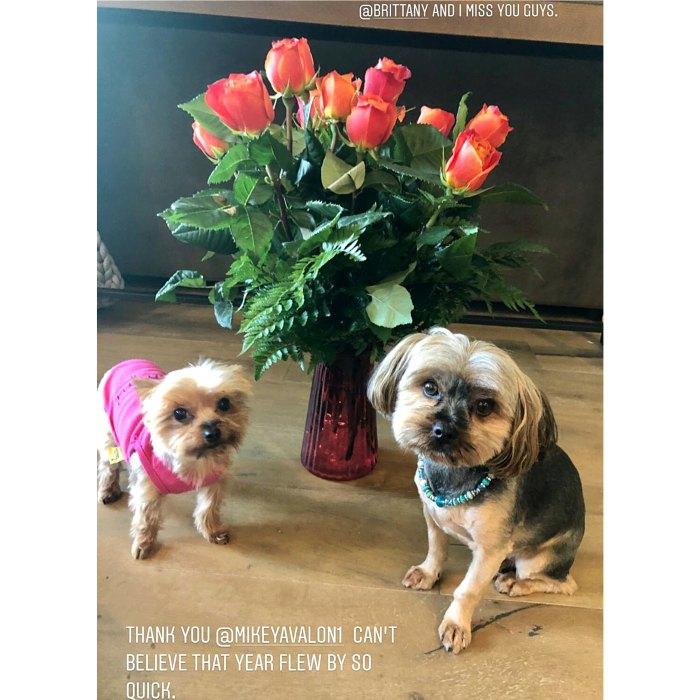 Jax Taylor Brittany Cartwright Celebrate Anniversary Amid Pump Rules Firings