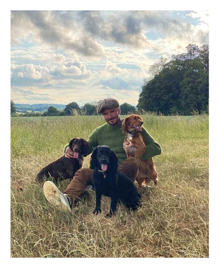 June 2020 Family Time Dogs David and Victoria Beckham Timeline Victoria Instagram