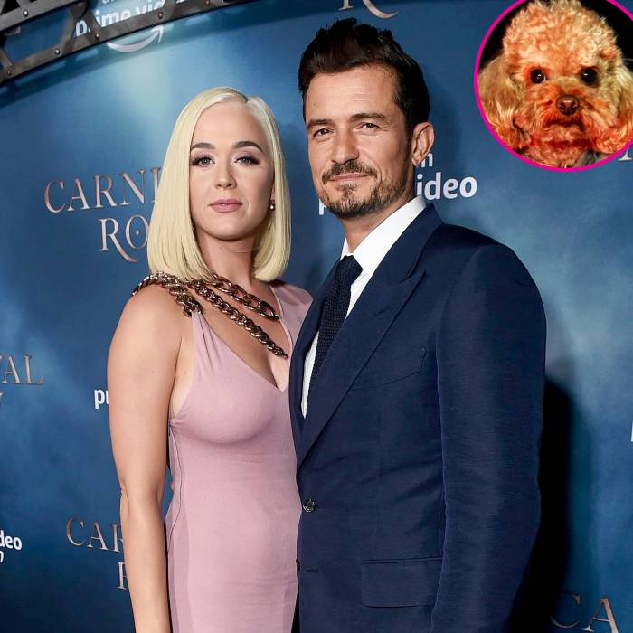 Orlando Bloom and Katy Perry Confirm His Dog Mighty Is Dead After 7-Day Search 1
