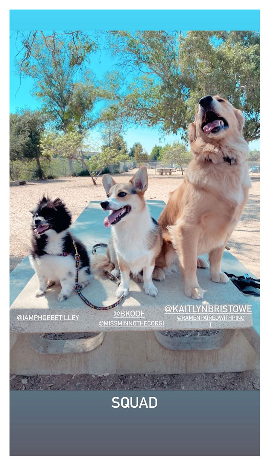 Bachelor Alums Becca Kufrin, Kaitlyn Bristowe and Becca Tilley Reunite for Adorable Puppy Play Date