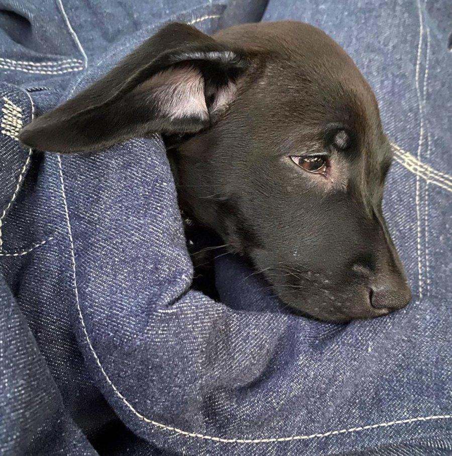 Dua Lipa and Boyfriend Anwar Hadid Adopt New Puppy Dexter