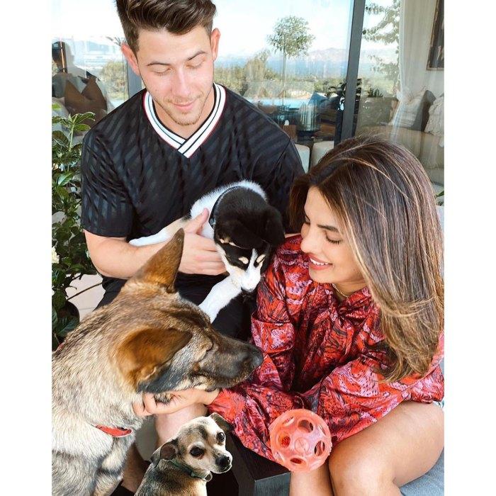 Nick Jonas And Priyanka Chopra More Who Are Adopting Or Fostering Pets During Quarantine