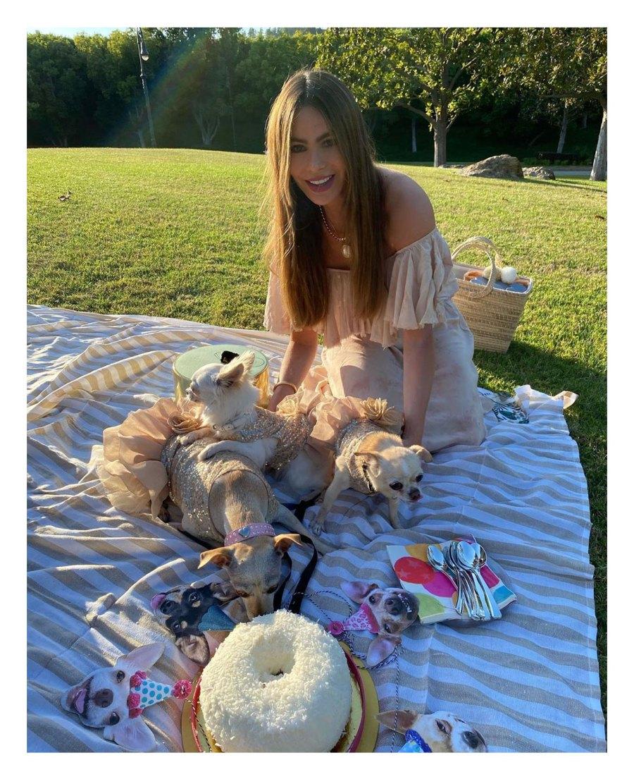 Sofia Vergara Stars Having Picnics Amid COVID-19