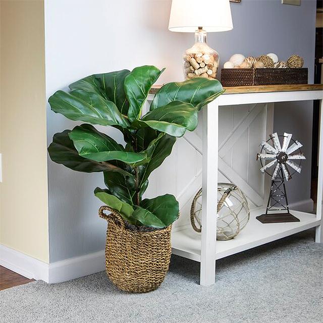 Bayou Breeze Fiddle Leaf Fig Plant in Basket