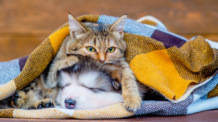 cat-dog-anxiety