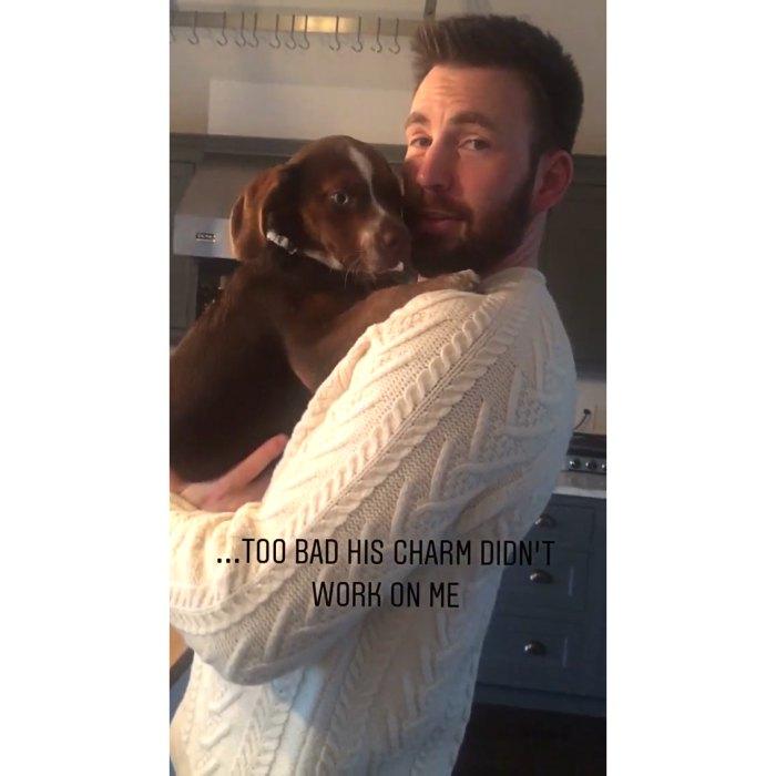 Chris Evans abraza a un cachorro en el icónico suéter de 'Knives Out' que se volvió viral