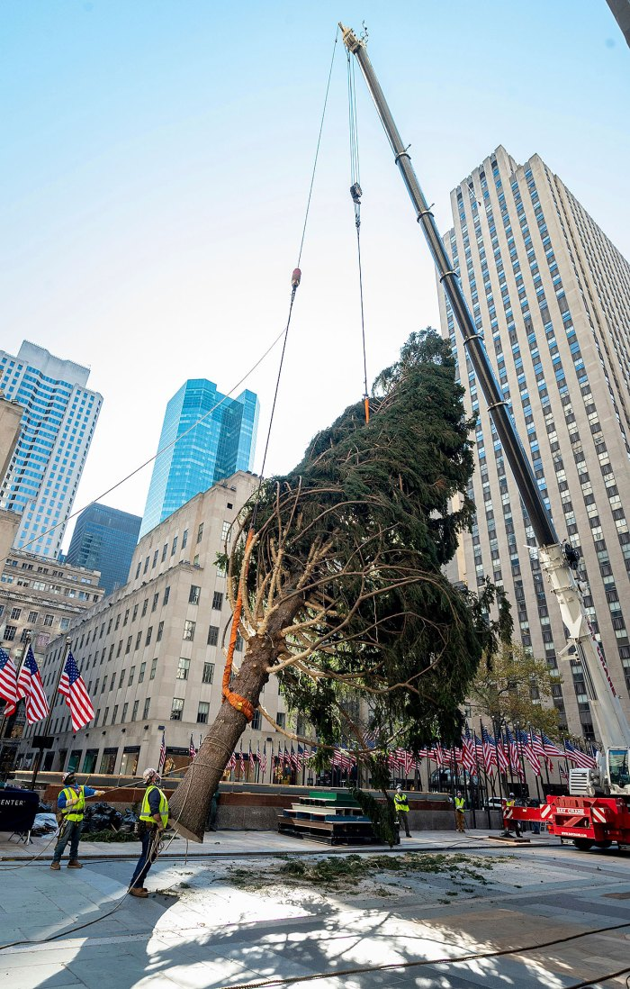 Rockefeller Center Claps Back After 2020 Christmas Tree Goes Viral, Draws Charlie Brown Comparisons