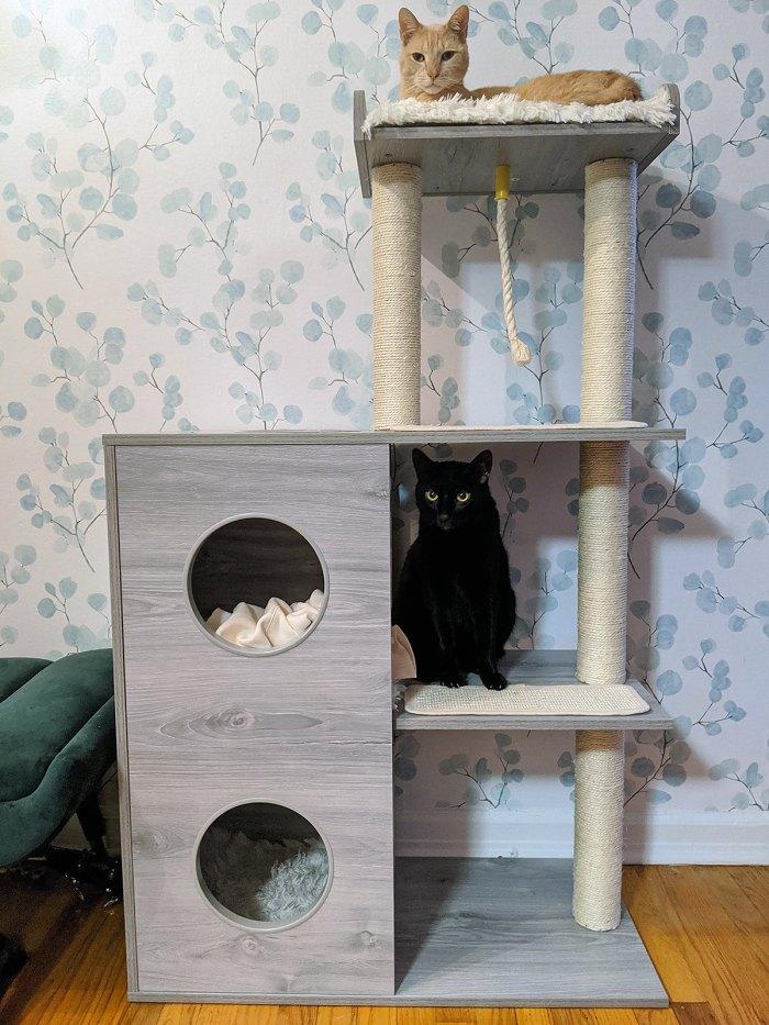 Frisco 52-in Modern Cat Tree & Condo