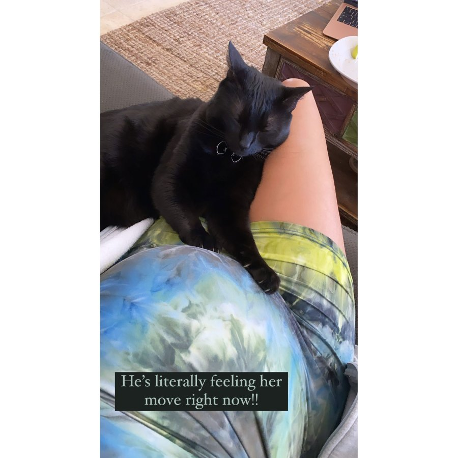 Scheana Shay Pregnant Cat