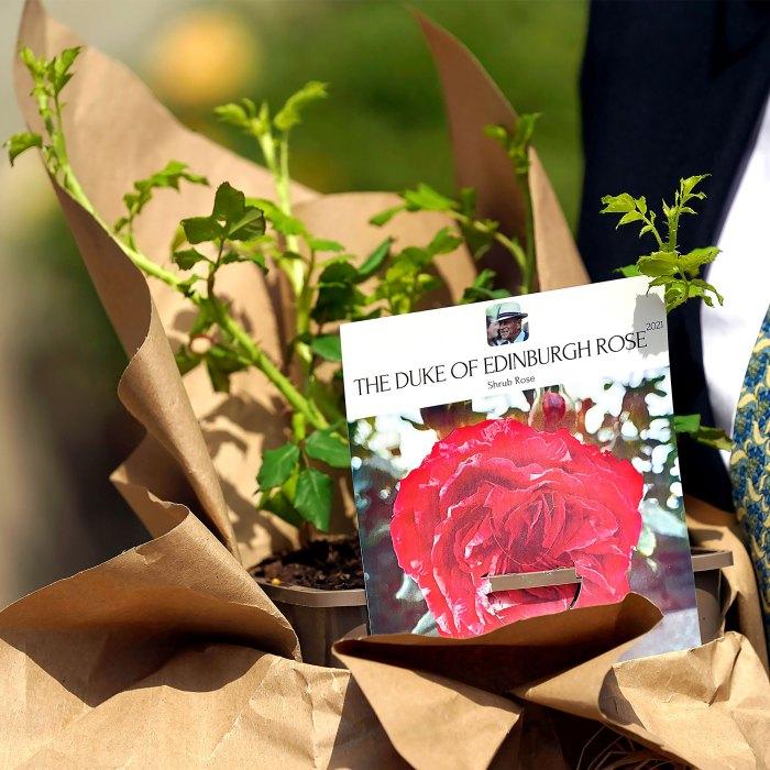 La reina Isabel II rinde homenaje al centenario del príncipe Philips con una nueva rosa