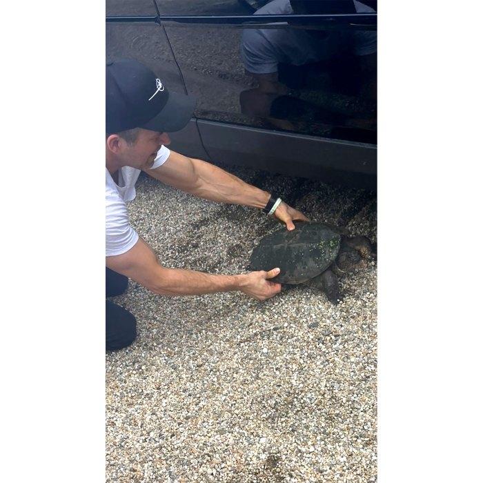 ¡Wrangler de tortugas!  Blake Lively se desmaya por 'Fine Ass Arms' de Ryan Reynold