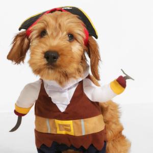 boohoo-pet-pirate
