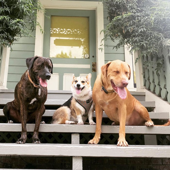 BiP Becca Thomas Bond With Each Other Dogs