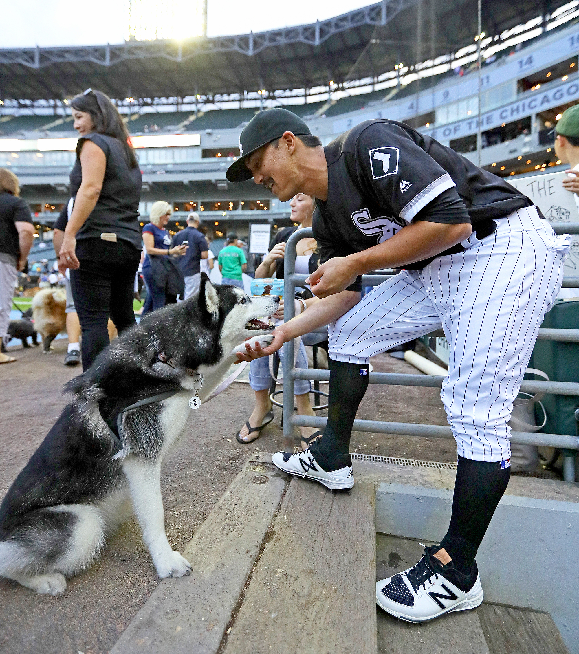 Chicago White Sox Dogs