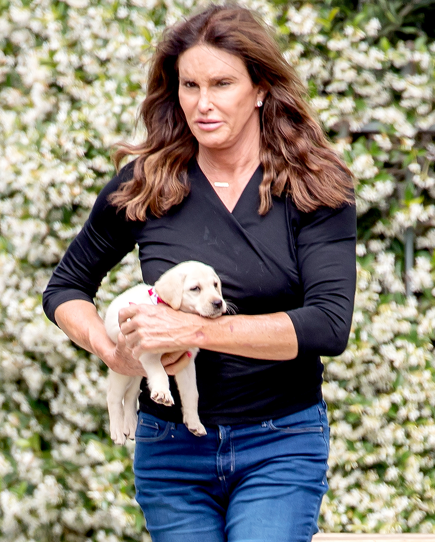 Caitlyn Jenner is seen playing with her new puppy in Malibu, CA on June 5, 2017.