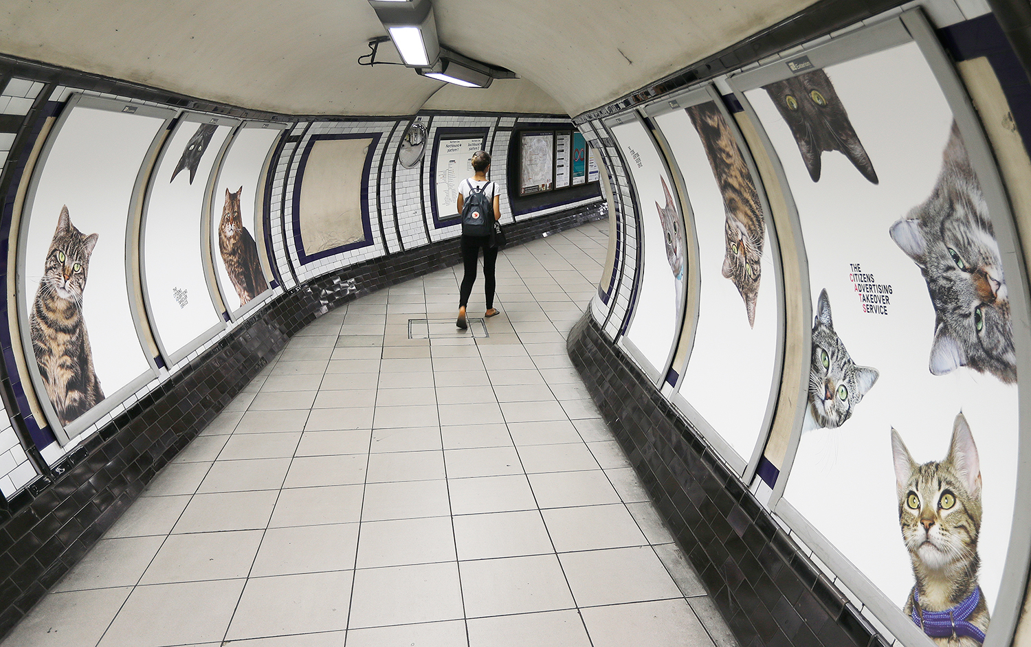 Cats fill the Clapham Common Tube station in London, Tuesday, Sept. 13, 2016