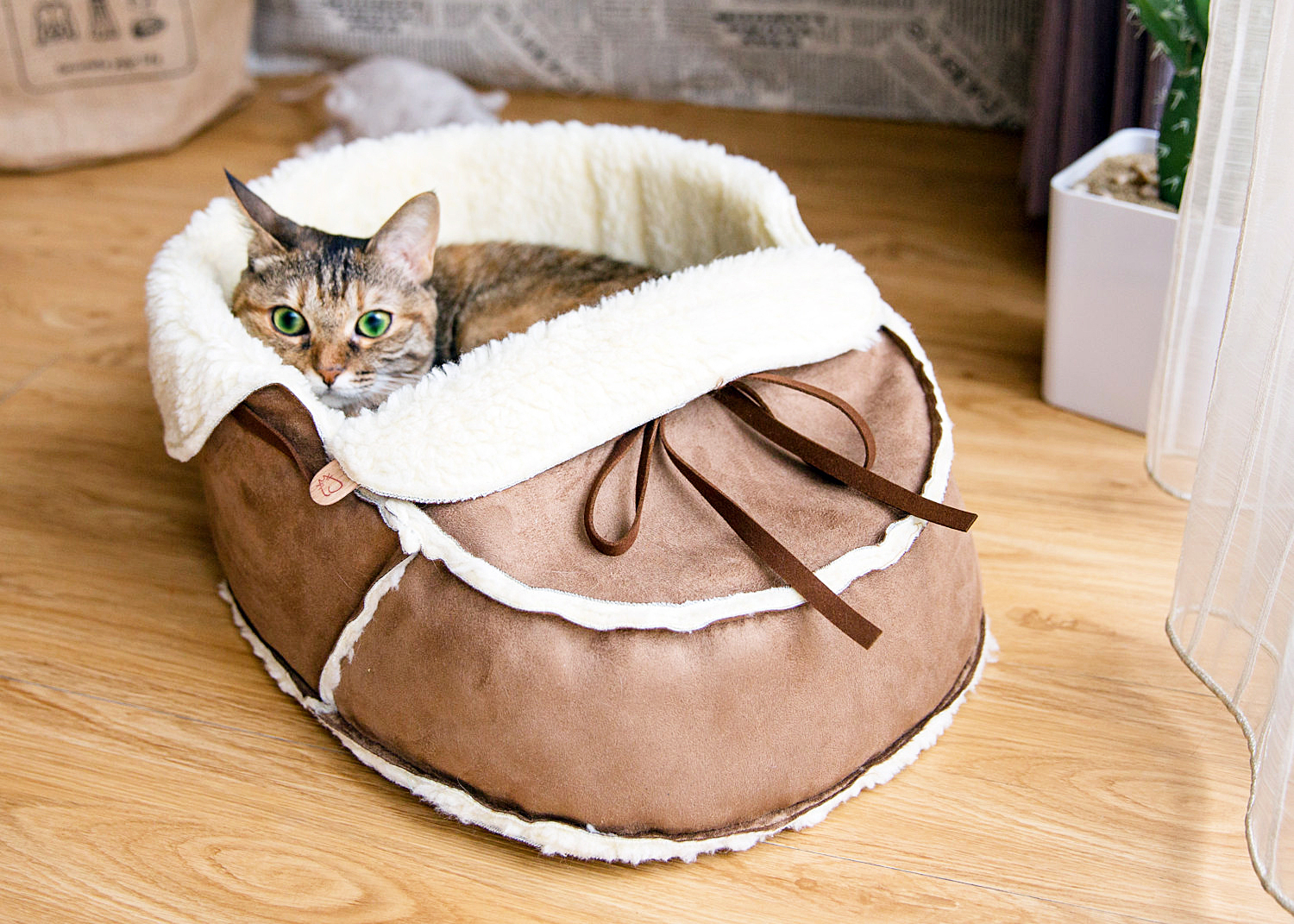 designer cat bed