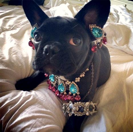 Lady Gaga dog 2