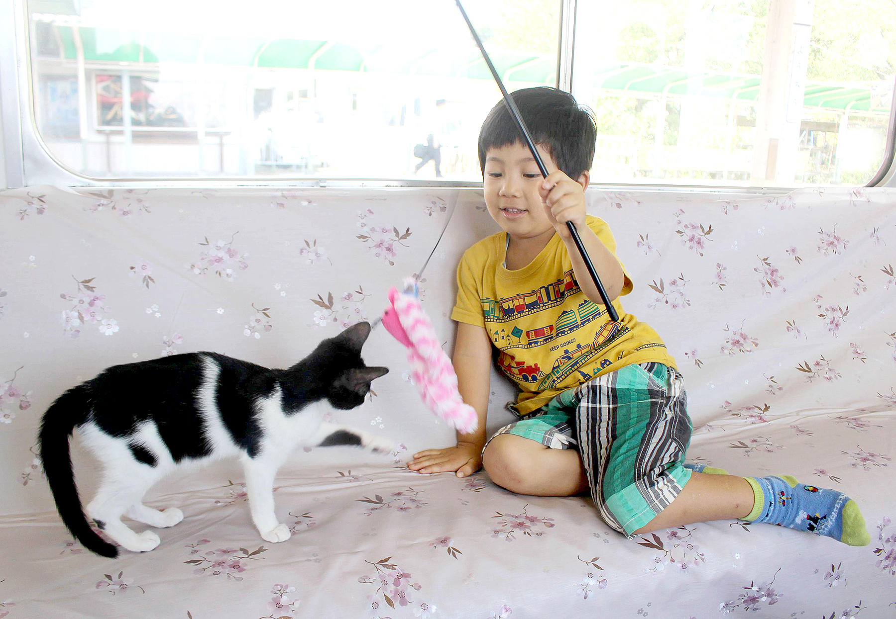 A boy plays with a cat aboard a cat cafe train on the Yoro Railway line between Gifu and Mie prefectures in central Japan in a one-day event on Sept. 10, 2017.