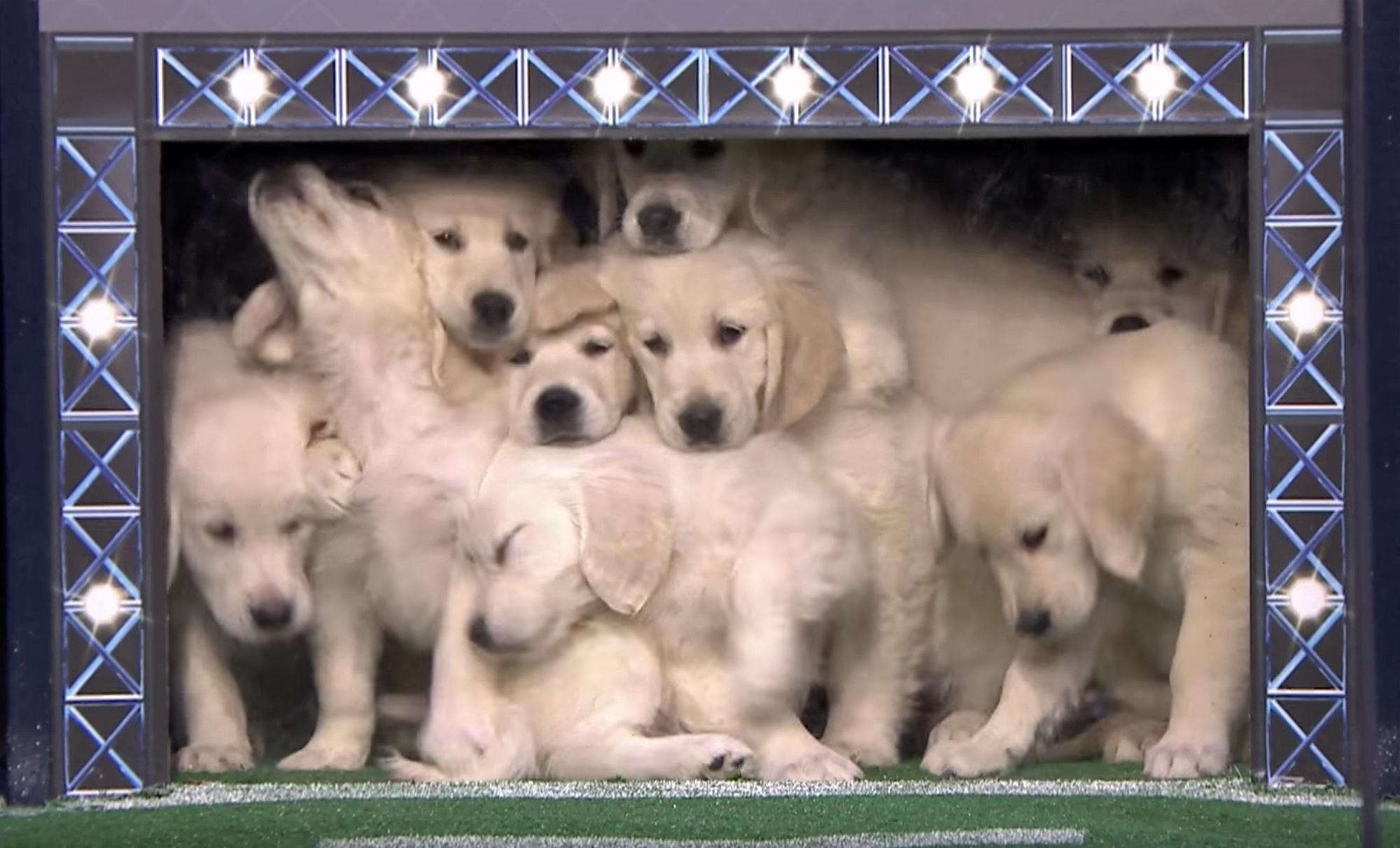Jimmy Fallon Super Bowl puppies