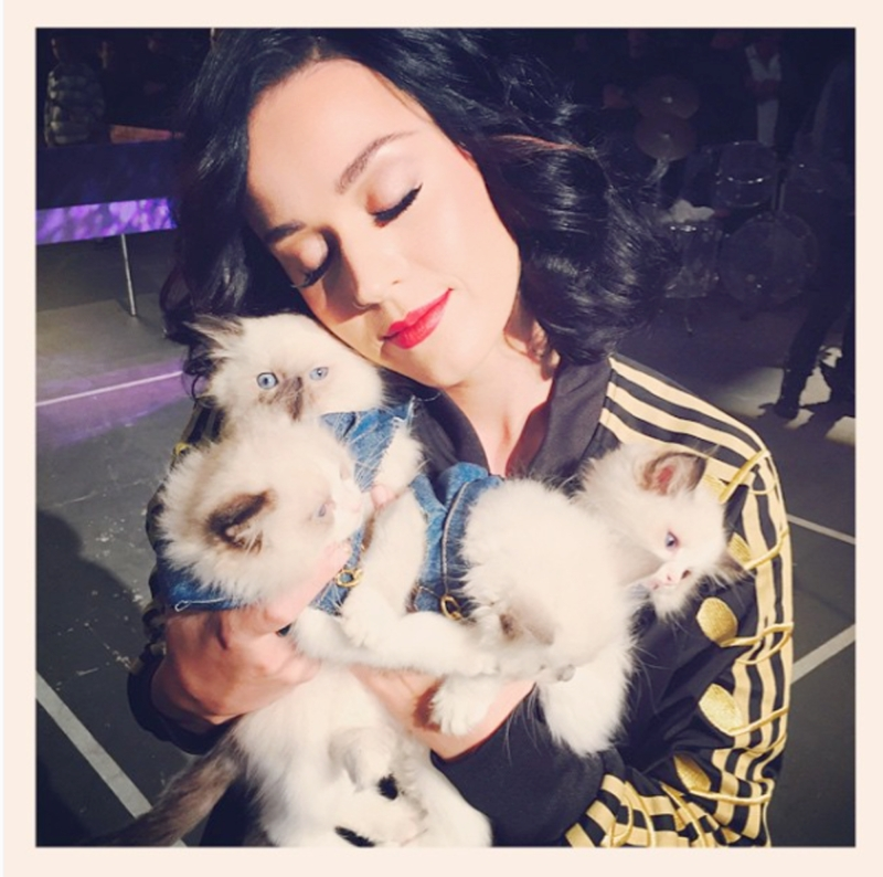 Katy Perry and Cats