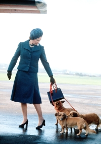 queen_dog-bedc2570-9146-40e1-a4f0-87f9253ac75a