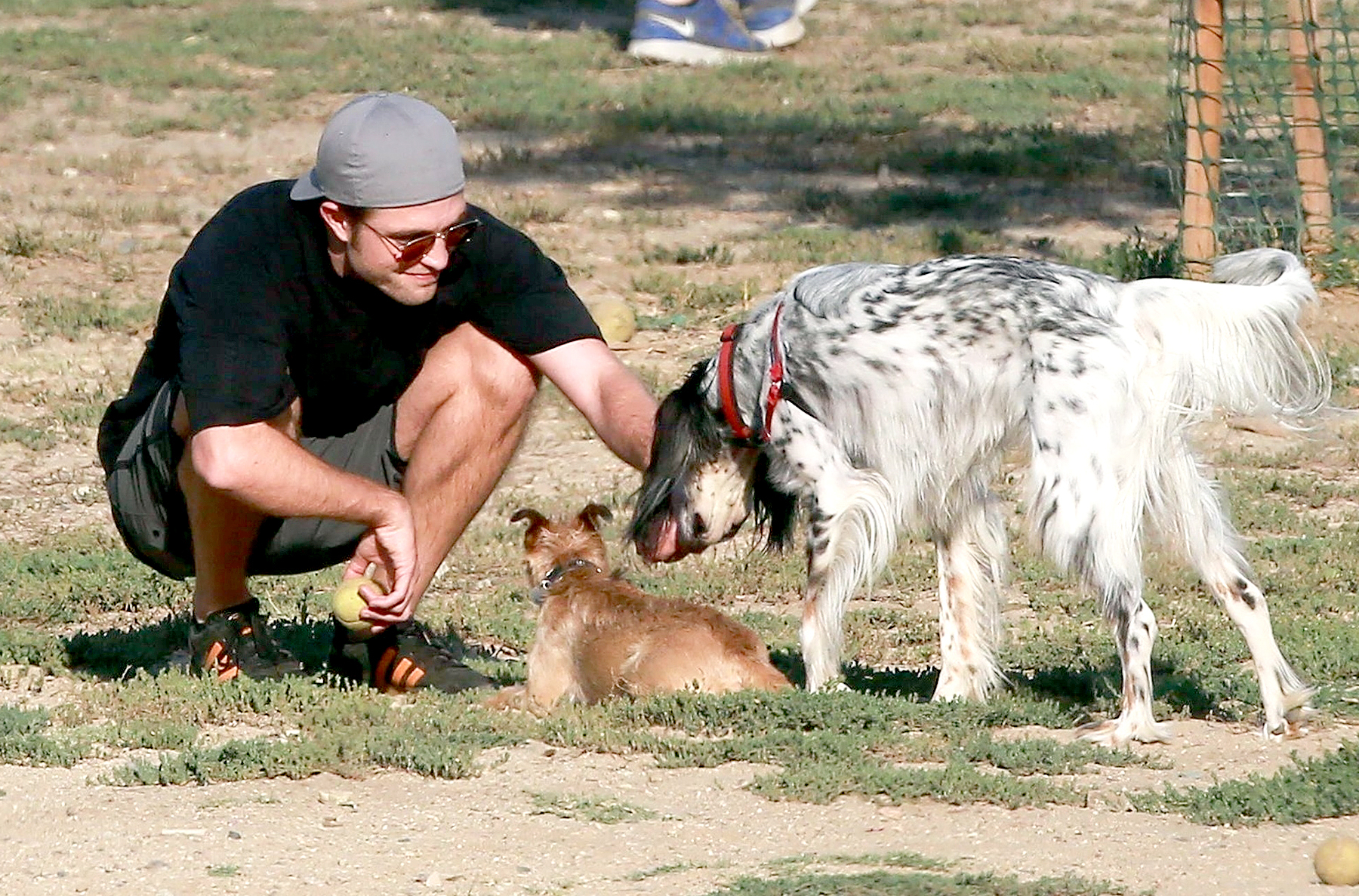 Robert Pattinson is spotted with his fiancee, FKA Twigs' dog, on a fun afternoon at the dog park on July 8, 2017.
