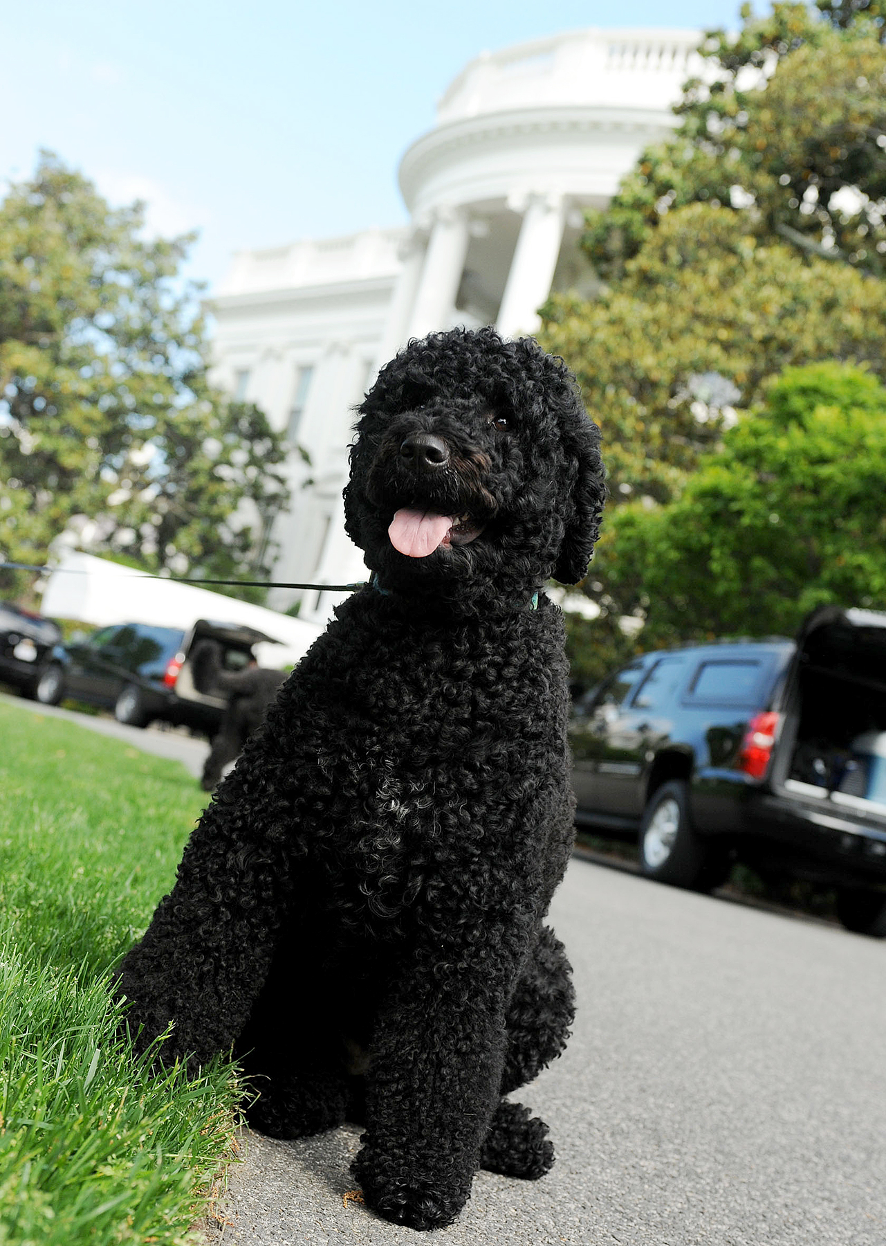 Obama family dog Sunny takes a walk on the South Lawn of the White House on May 17, 2014 in Washington, DC.